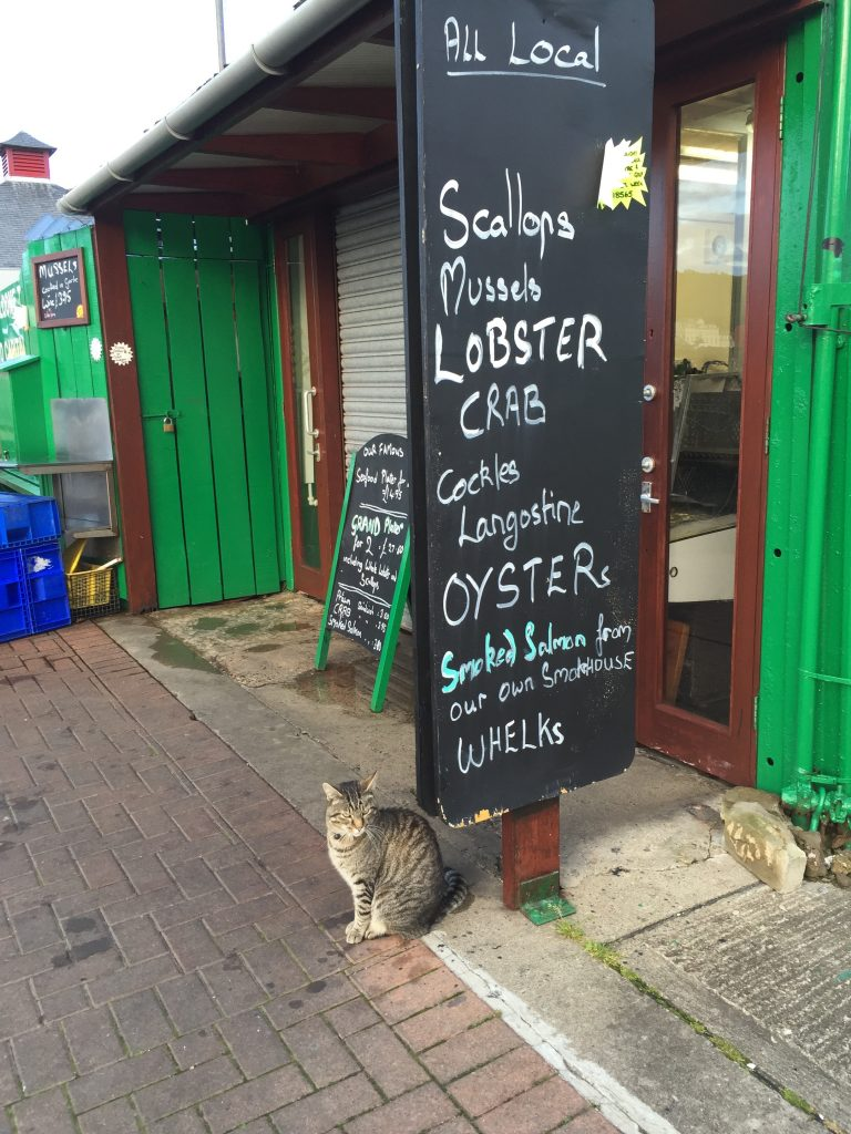 Cat sitting at seafood restaurant in Scotland