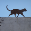 Artwork of a cat on a roof