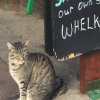 cat sitting at sign
