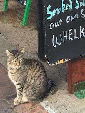 cat sitting at sign