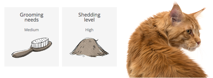 Grooming chart Maine Coon
